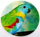 Neoféma tyrkysová MINI logo