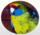 Rosela žlutobřichá MINI logo