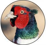 Bažant MAXI logo L2 č.151