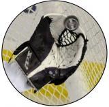 Lední hokej MINI logo L1č.178