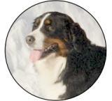 Bernský salašnický pes MINI logo L1č.197