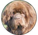 Novofundladský pes MAXI logo L2č.202