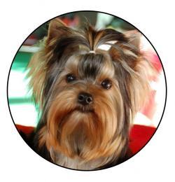 Jorkšírský teriér MAXI logo L2č.144 - zvětšit obrázek