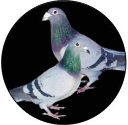 Holubi MINI logo L1č.188 - zvětšit obrázek